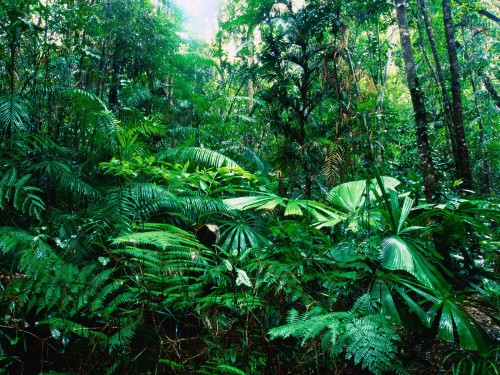 beautiful tropical rainforest