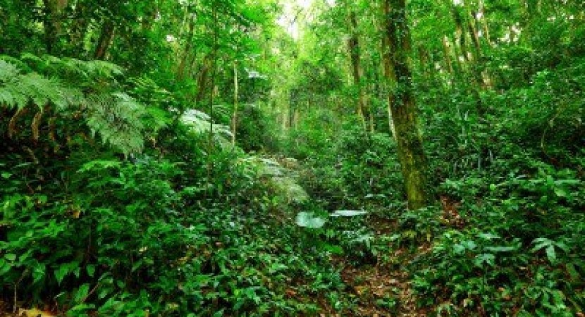 a report on the tropical rainforest Learn about tropical environments and their ecosystems with our rainforest resources for ks2 geography students featuring rainforest information activities, reading comprehensions, teaching resource packs and google expeditions.
